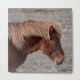 Icelandic Pony Metal Print