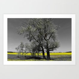 The Beauty of Canola Fields Art Print