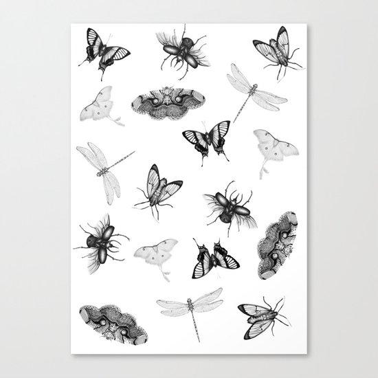 Entomologist Dreams Canvas Print
