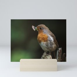 Robins lunch Mini Art Print