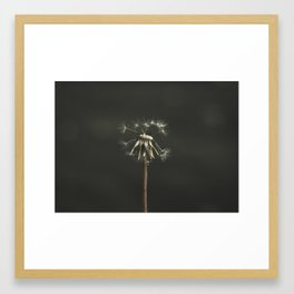 Loves me, Loves me not Framed Art Print