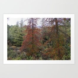 """""""Red tree"""". Deep forest at the mountains Art Print"""