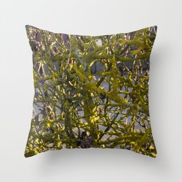 Moss in the Spring Throw Pillow
