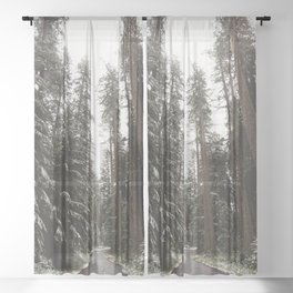 Redwood Forest Adventure II - Nature Photography Sheer Curtain