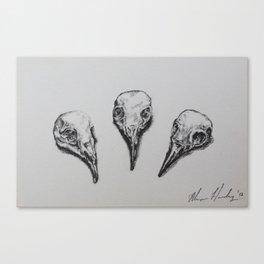 'Three Bird Skulls' Canvas Print