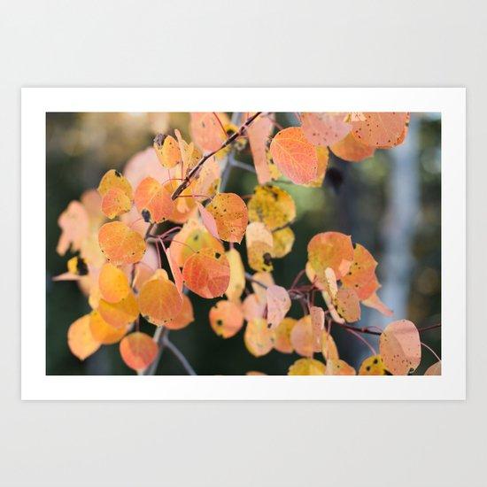 aspen leaves. Art Print