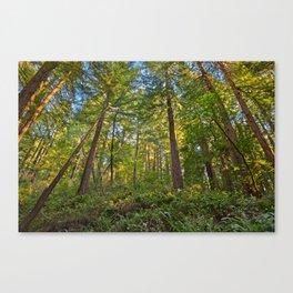 Muir Woods Canvas Print