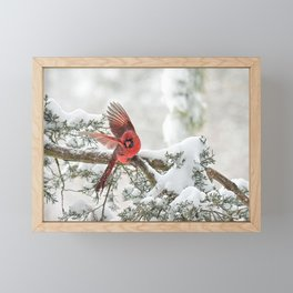 Winter Snow Flight: Northern Cardinal Framed Mini Art Print