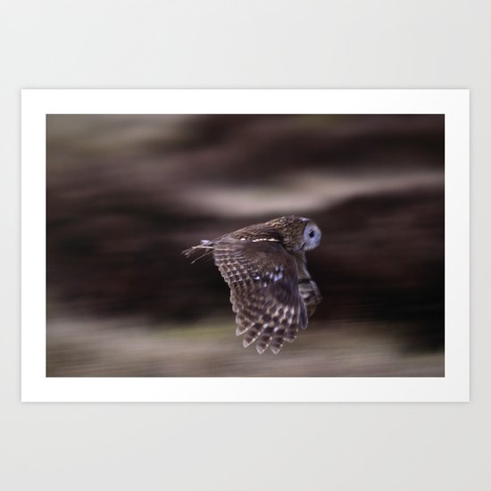 TAWNY OWL FLIGHT Art Print