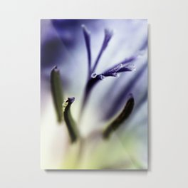 Freesia flowers Metal Print