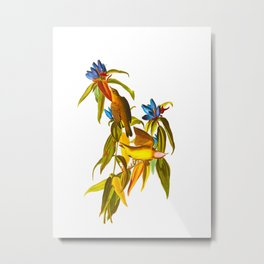 Connecticut Warbler Bird Metal Print