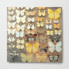 The Butterfly Collection I Metal Print