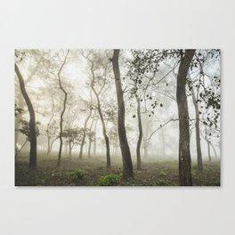 Chitwan national park forest Canvas Print