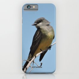 A Cassin's Kingbird Scopes the Skies for Flies iPhone Case