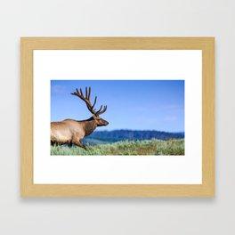 A 6 Point Bull Elk in Yellowstone National Park Framed Art Print