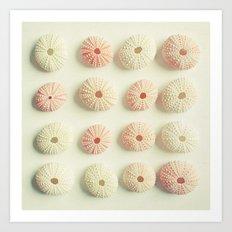 Sea Urchin Collection Art Print