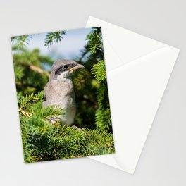 Fledgling Loggerhead Shrike Stationery Cards