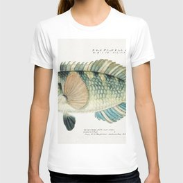 Antique fish Wrasse drawn by Fe Clarke (1849-1899) T-shirt