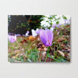Automn's flower Metal Print
