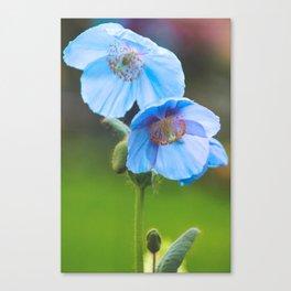 Himalayan Blue Poppy Canvas Print
