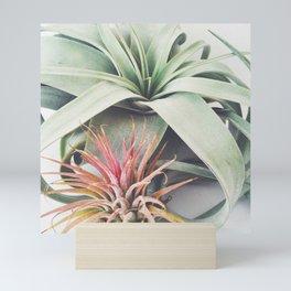 Air Plant Collection III Mini Art Print