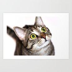 Tiger Cat Art Print