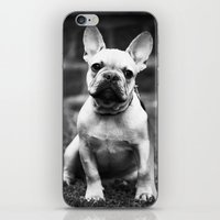french bulldog iPhone & iPod Skins featuring French Bulldog by Kathleen Schulze