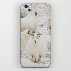 Icelandic Sheep iPhone & iPod Skin