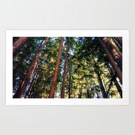 Trees of the Golden Hour Art Print