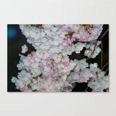 Underneath The Cherry Tree Canvas Print