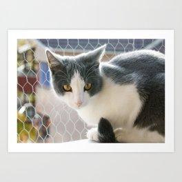 A Max And Mantle Bi Colour Cat Art Print
