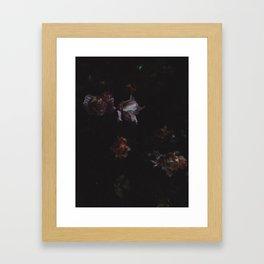 Cold Roses (II) Framed Art Print