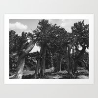 leaning trees Art Print