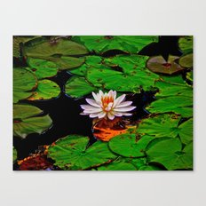 From the Lilypads Canvas Print
