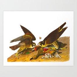 Great-footed Hawk Art Print