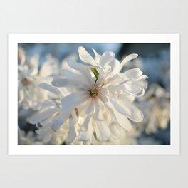Angel of Spring Art Print