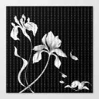 aelwen Canvas Prints featuring Iris on Black by Aelwen