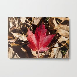 Maple Leaf Photography Print Metal Print