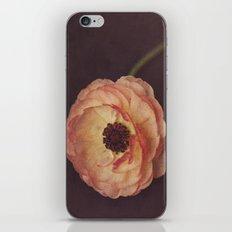 Winter Ranunculus  iPhone & iPod Skin