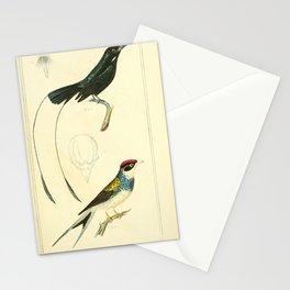 Malabar Shrike, Brazilian Yellow Bill15 Stationery Cards