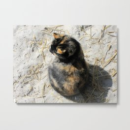 Sand Kitty Metal Print