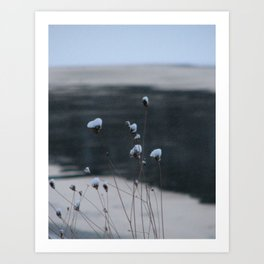 Snow-Covered Buds Art Print