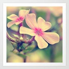 Summer flowers macro 266 Art Print