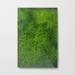 Green Fluff (wild fennel) Metal Print