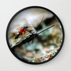 Ant Insect Photography, Nature, Macro, Home Decor Wall Clock