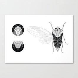 cicada (ii) Canvas Print