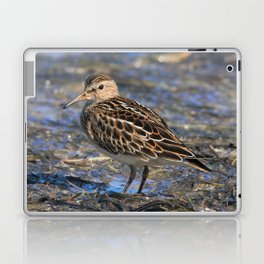Party with Pectoral Sandpipers Laptop & iPad Skin