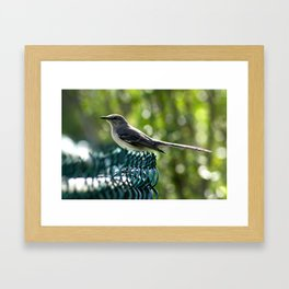 Bird Perched  Framed Art Print