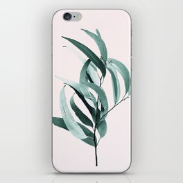 Eucalyptus II - Australian gum tree iPhone Skin