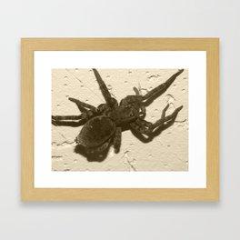 spider on the ceiling Framed Art Print